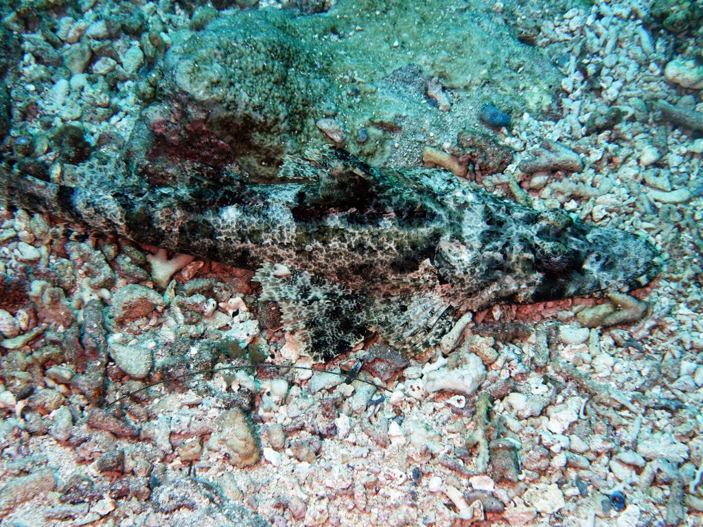 nice crocodile fish