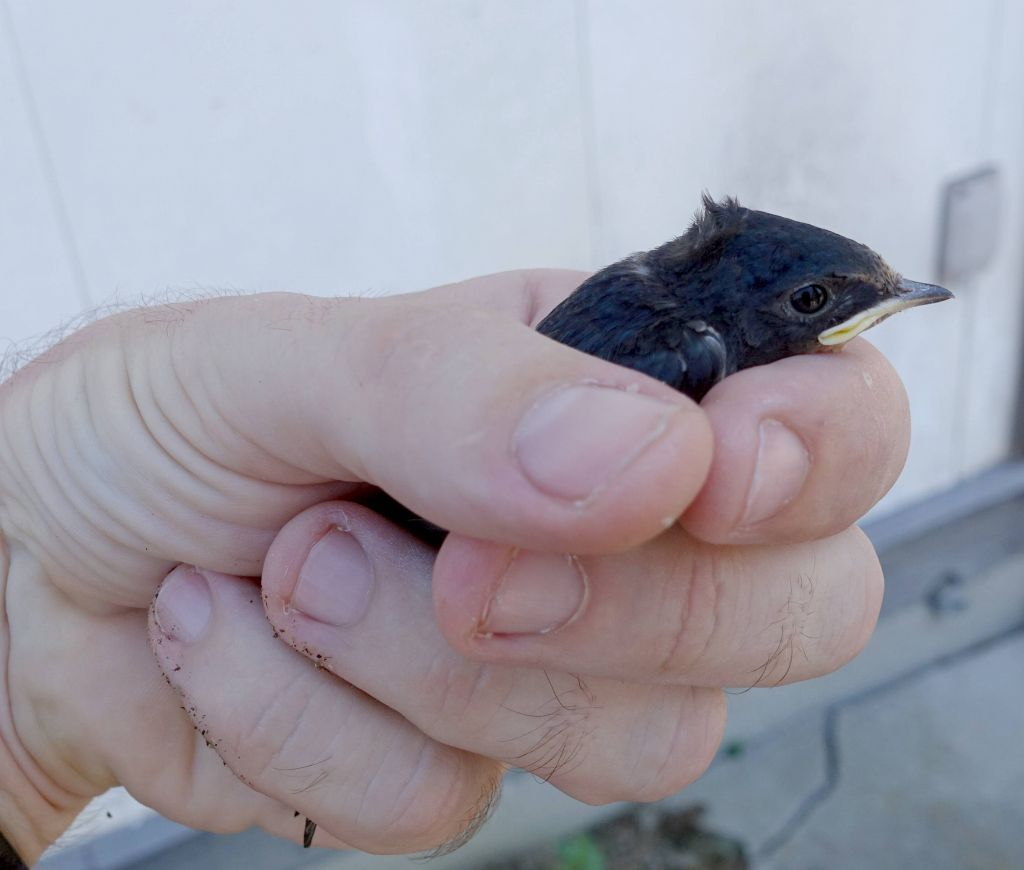 I found this little guy on the ground , turns out it could fly fine