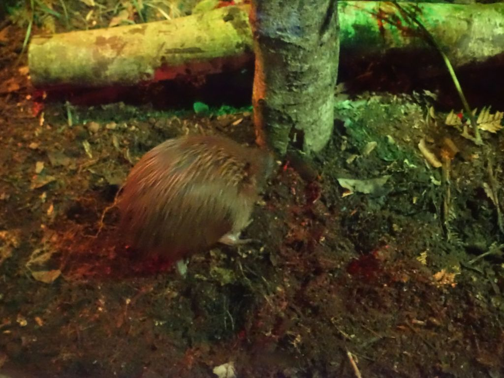 kiwi in its enclosure