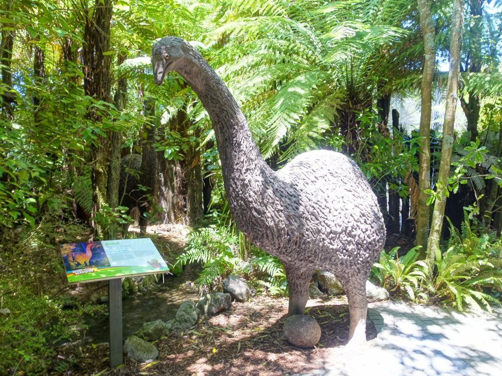 the tallest land bird, now extinct (Moa)