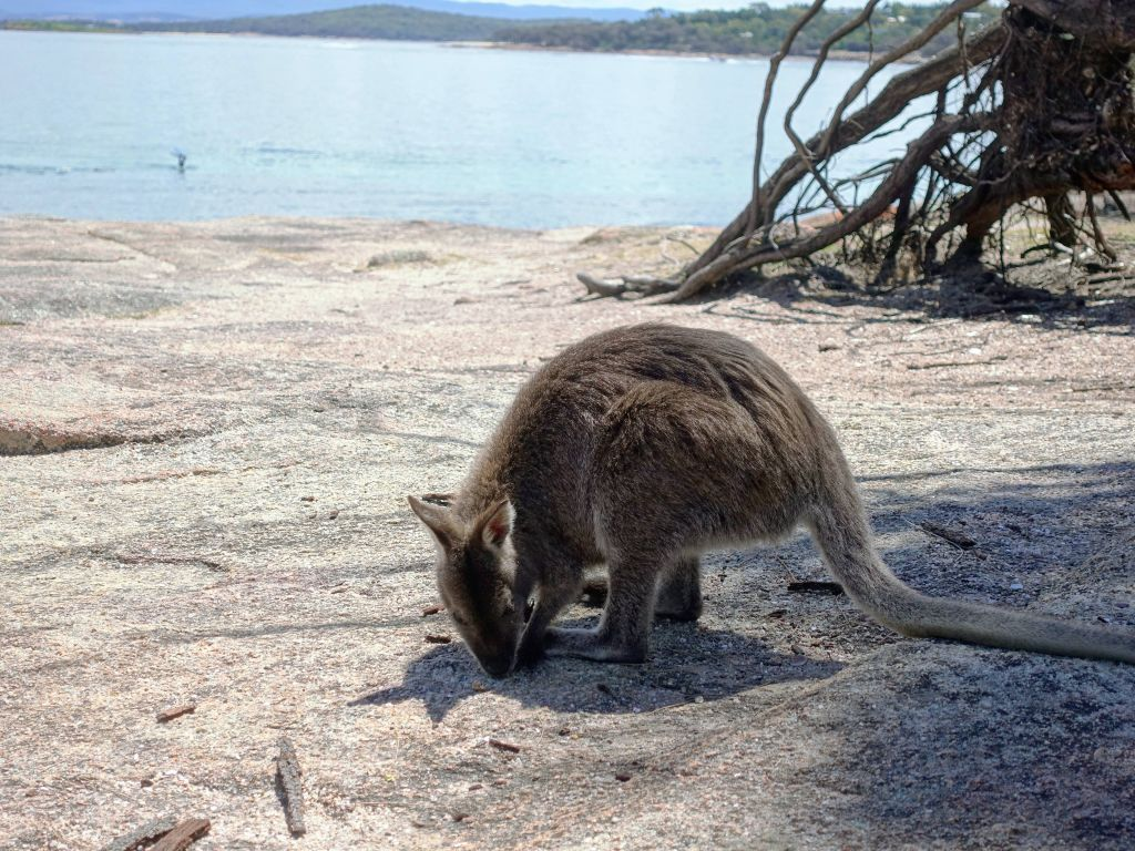 and did I mention wallabies?