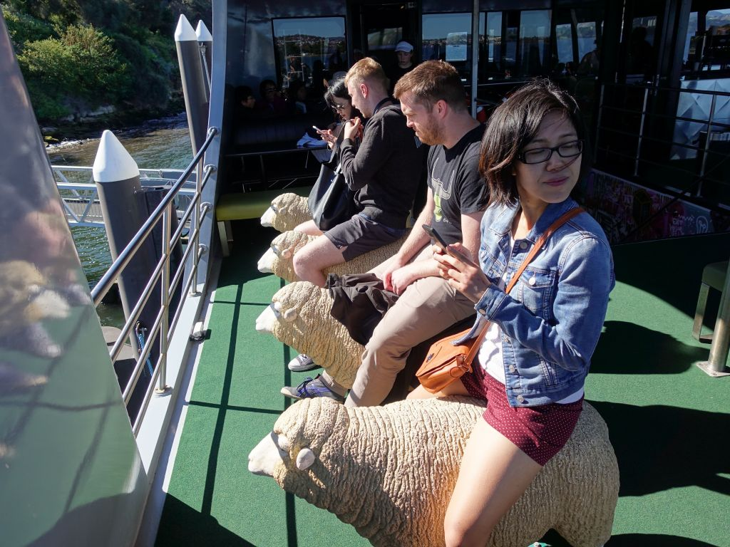 where you can ride on sheep, because why wouldn't you?