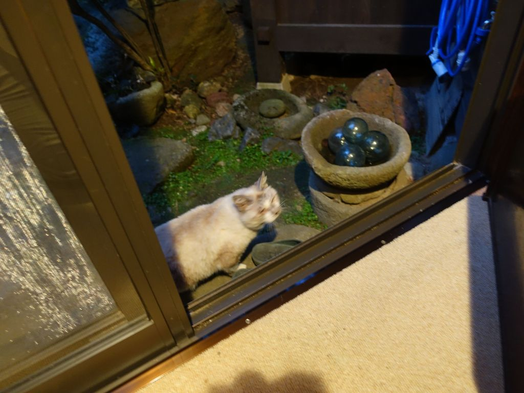 our ryokan had a very old cat that was half deaf and blind