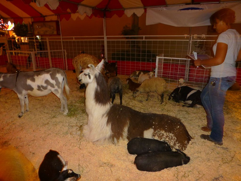 petting zoo for kids