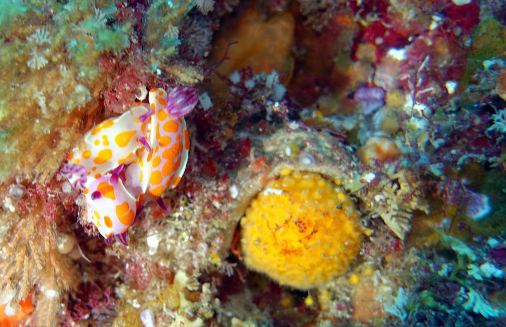 nudibranch threesome
