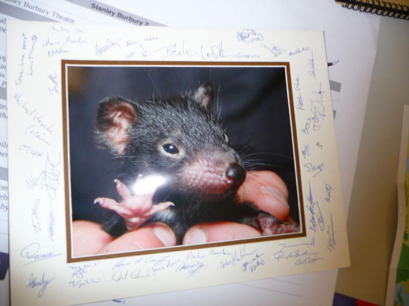 all the money raised went to saving Tasmanian Devils